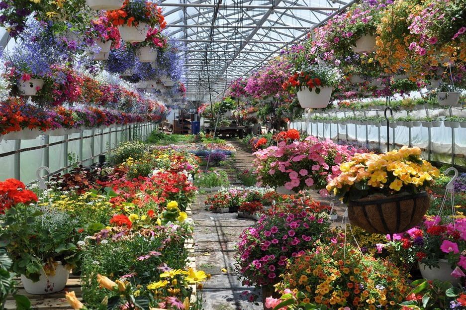 Свой цветочный бизнес