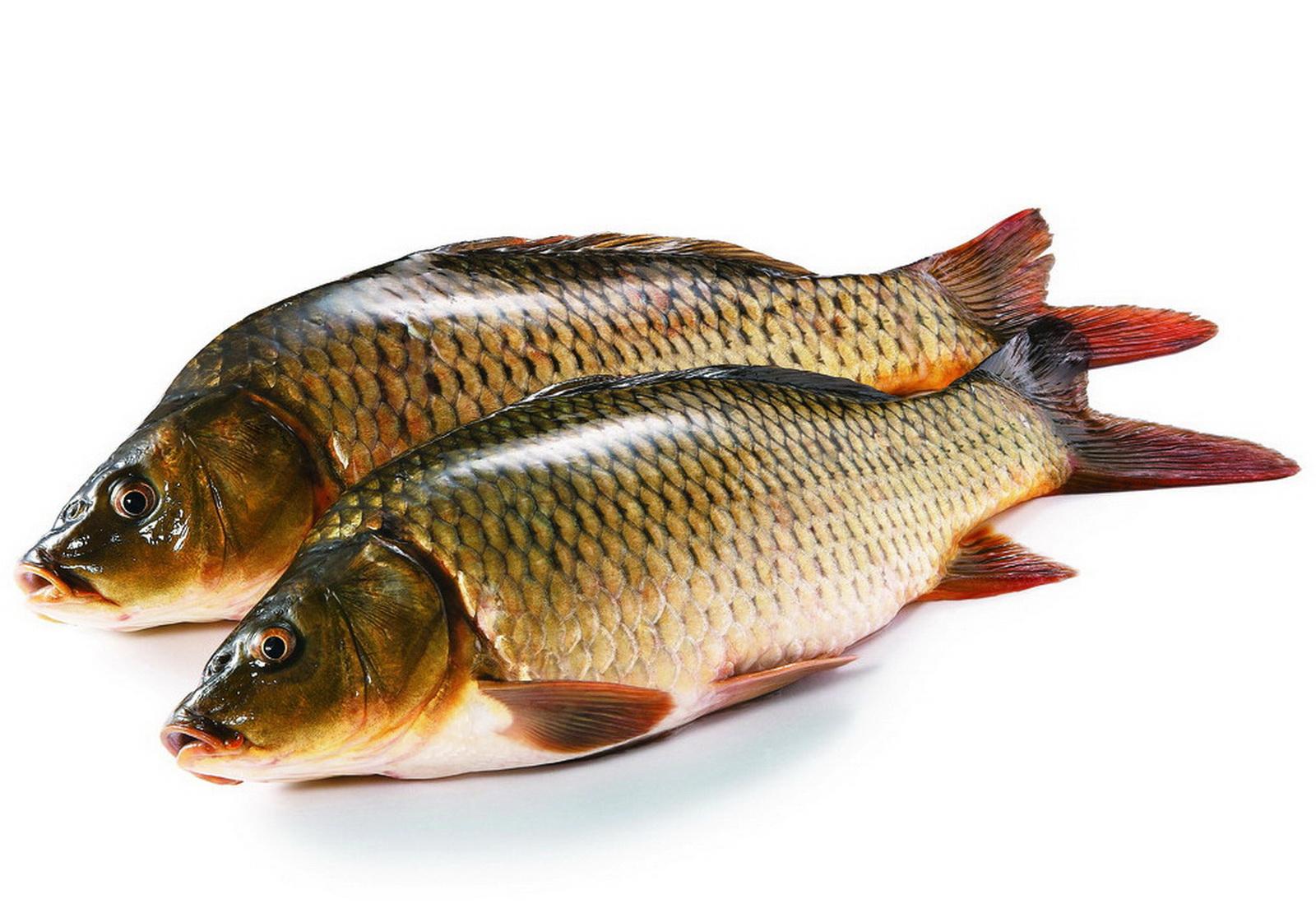 Чешуя рыб
